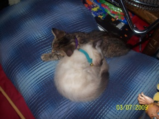 The new kittens, boots and brownie ...