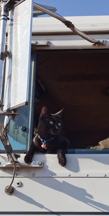 Punkin the trucking cat