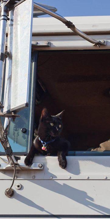 Punkin the trucking cat