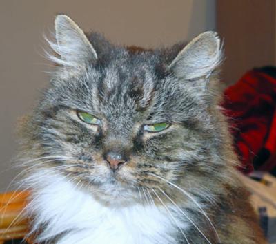 Rammy in November 2009