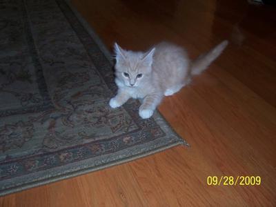 Rascal as a kitten