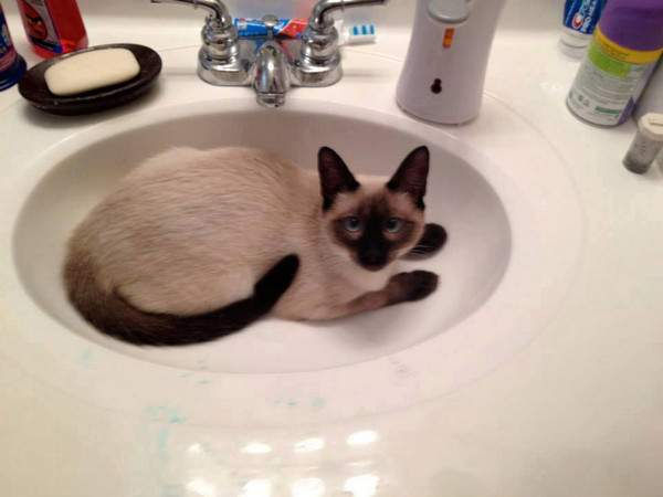 Razzy Rene in the sink