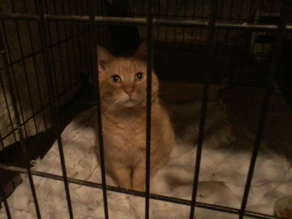 Red-Red, an FIV positive feral cat