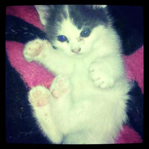 Roxy the kitten