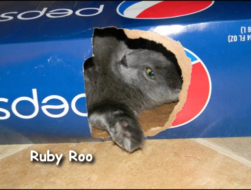 Box lover Ruby Roo