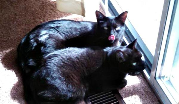 Salem and Iris