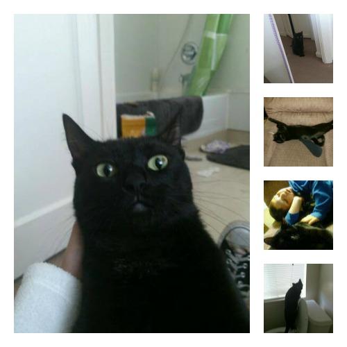 Samantha the black cat