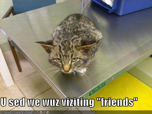 Scared cat at the veterinarian