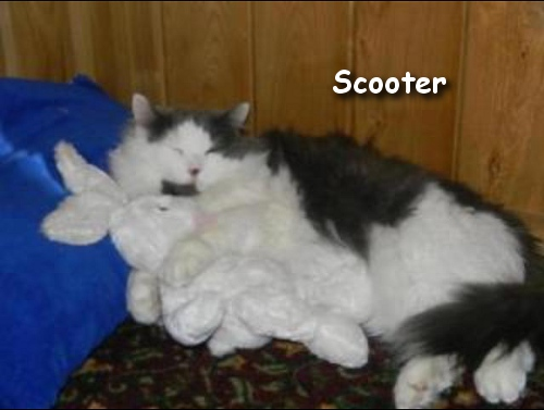 Scooter loves his bunny