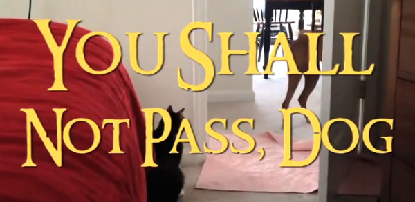 Dog shall not pass
