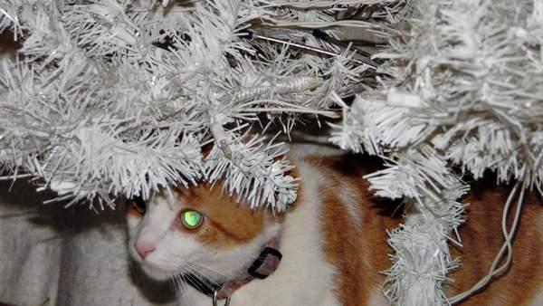 Shamus in the tree