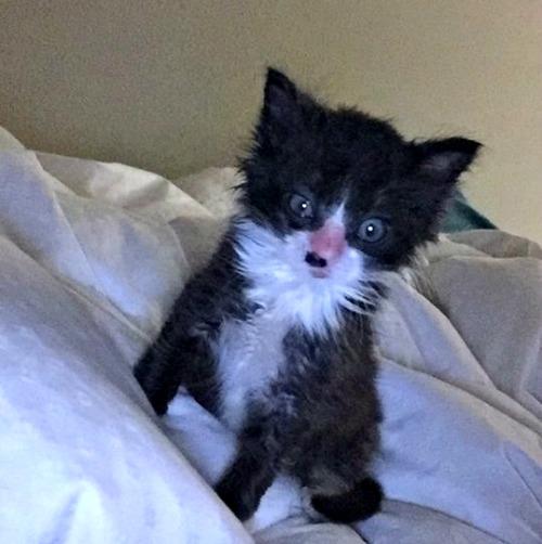 Should I buy cat health insurance - kitten