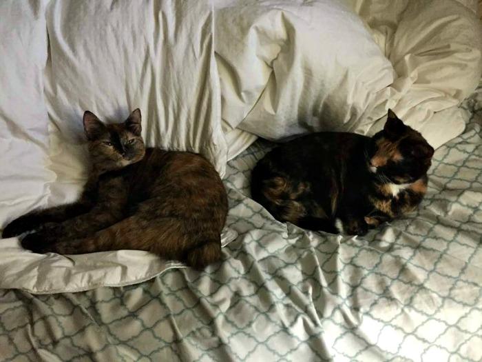 Should I buy cat health insurance - cats