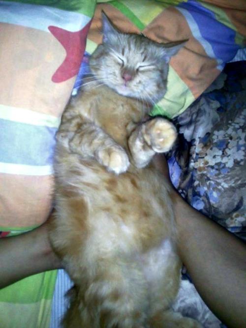 Shumi sleeping