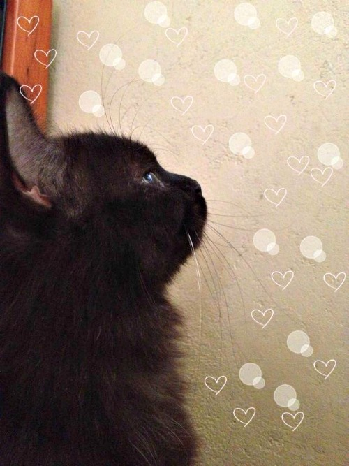 Sirius contemplating life as a cat