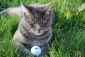 Smokey with his golf ball