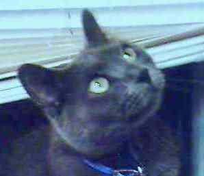 Smokey Joe -- my beloved feline companion and best friend