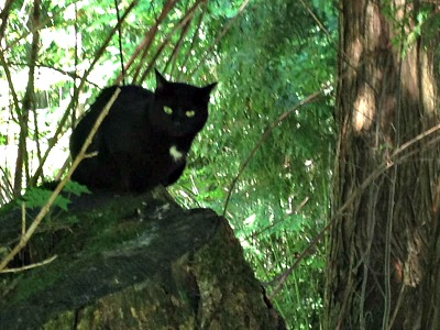 Spaghetti the black cat