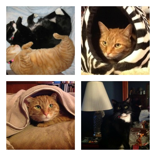 Squeaky and Rudy collage