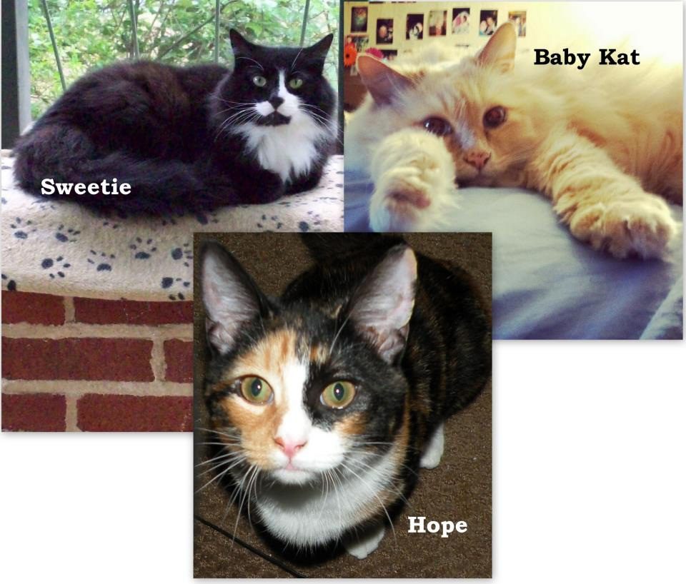 Rescue cats Sweetie, Baby Kat and Hope