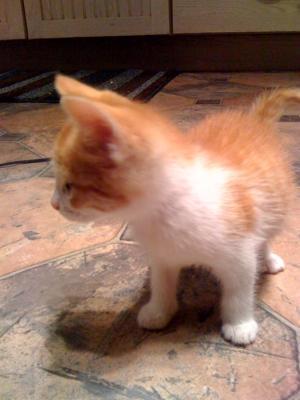 Tigger the Kitten1