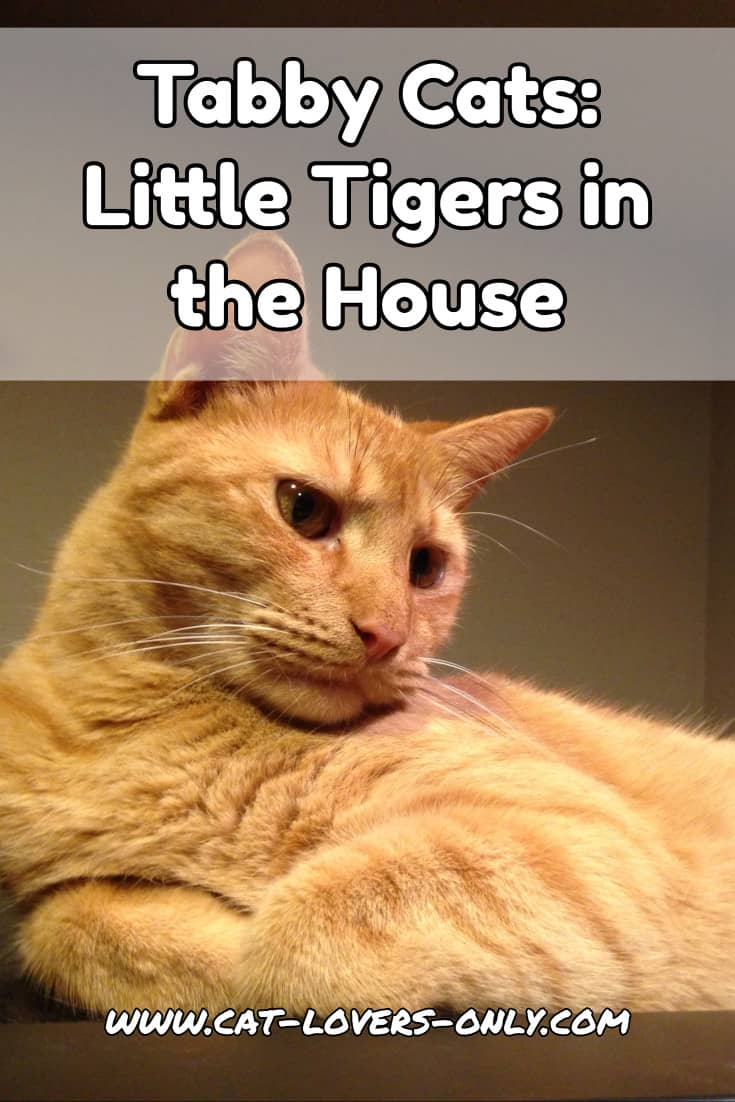 Tabby Cats: Little Tigers in the House