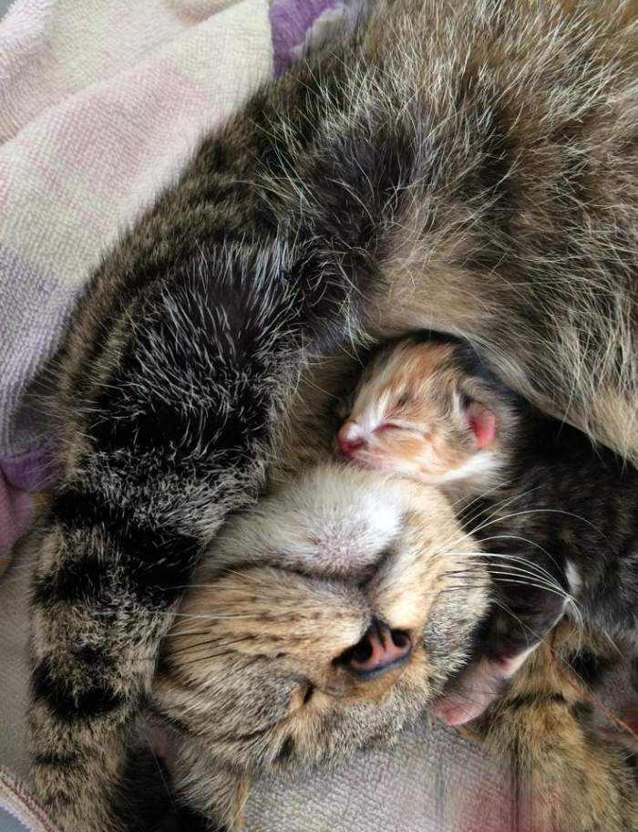 Tabby mom and kitten