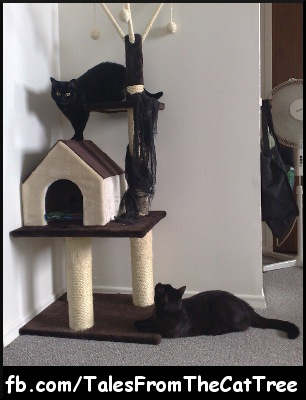 Tales from the Cat Tree