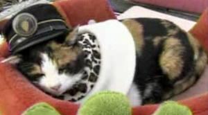 Tama the railway cat
