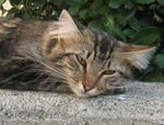 Molly the feral cat