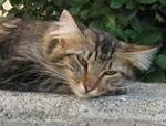 taming feral cats thumb