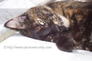 Teddie cat poses