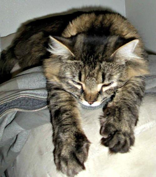 The Supercat pose