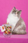 CH iCandy Jelly Belly