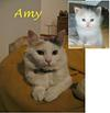 Our Amy, now & then
