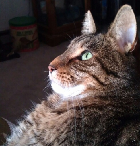 Tiger's the tabby's profile