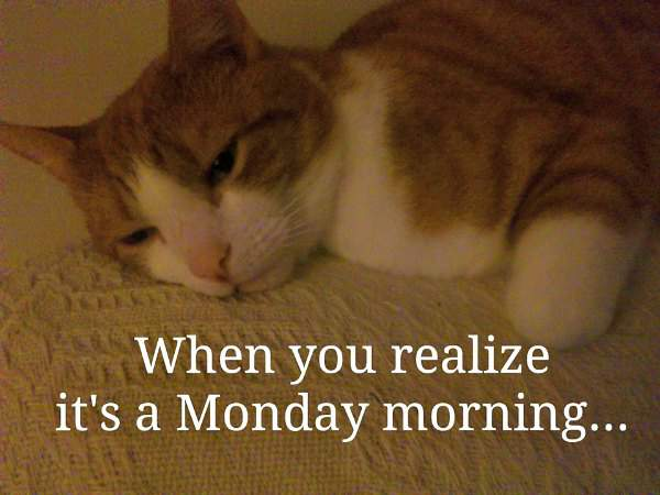 Timmy hates Monday mornings