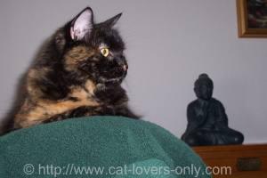 Frankie Cat with Buddha