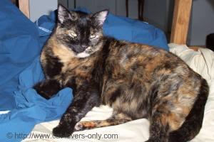 Teddie Cat on Sheets