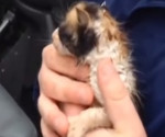 Tornado kitten rescue