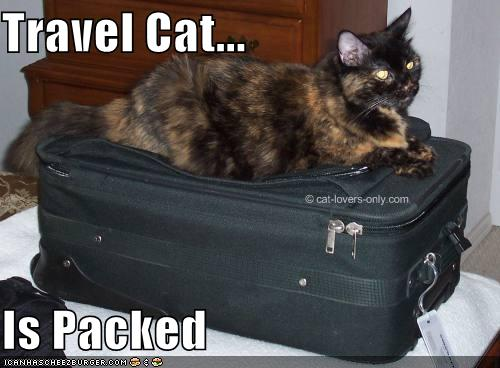 Frankie cat on top of the suitcase