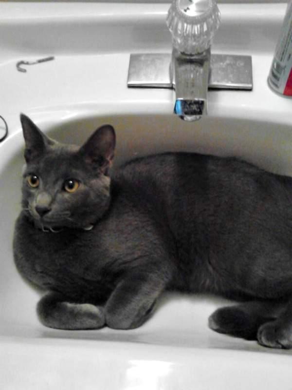 Tyler in the sink