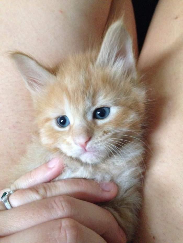 Weasley kitten growing up