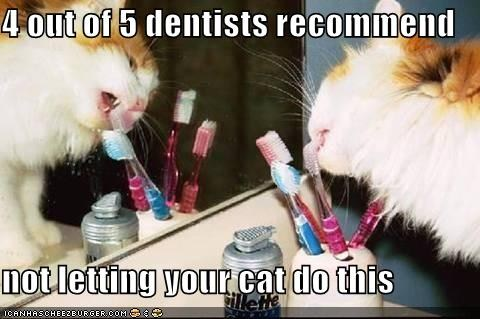 cat chewing toothbrush