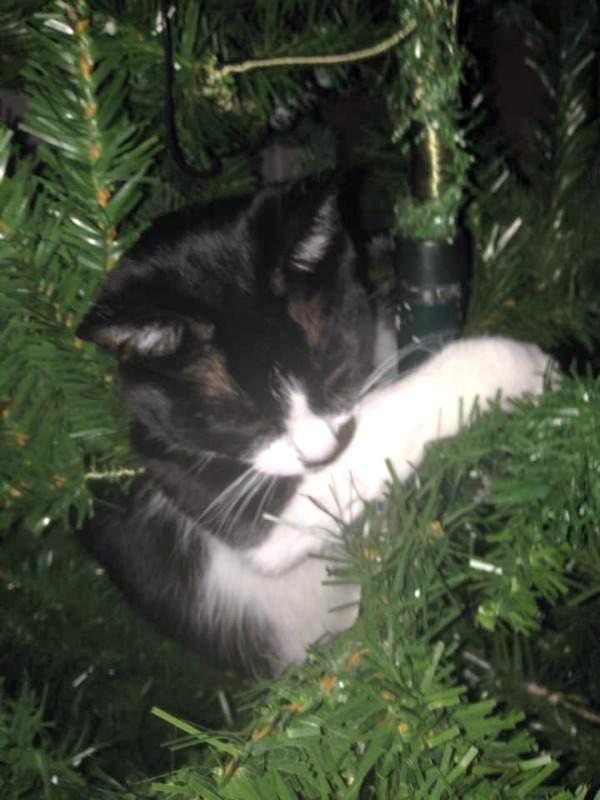 Addi in the tree