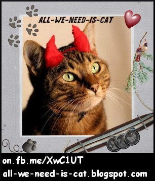 All We Need Is Cat