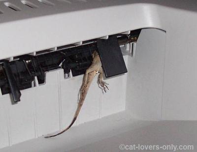 Lizard Stuck in Printer