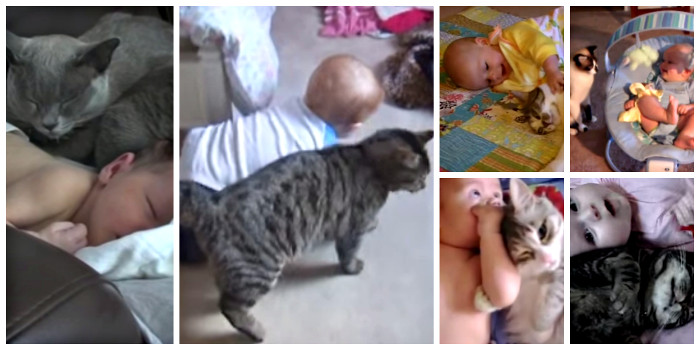 Cats and babies collage