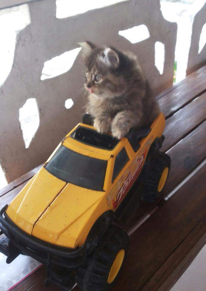 Baby Una going for a ride