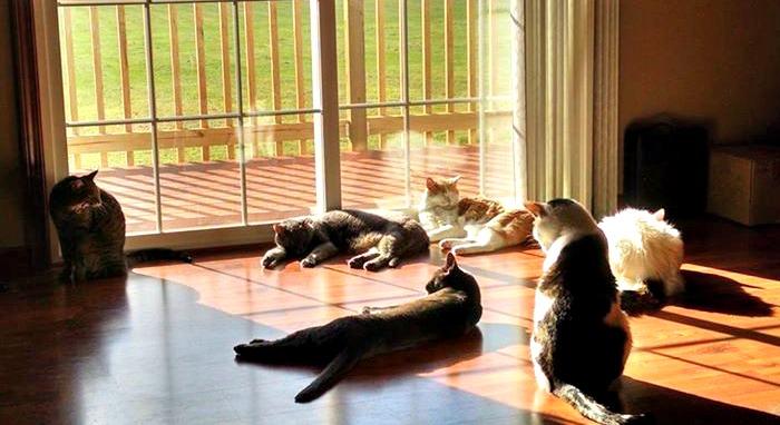 Kitties enjoying the sun